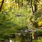 Sundappled Oak Creek by Linda Sparks