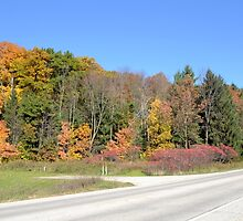 Roadside Fall Color by Kathleen Brant