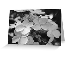 Hydrangeas Black and White Greeting Card