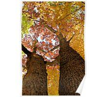 Autumn Rainbow 2 Poster