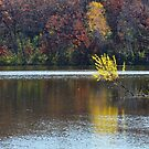Schulze Lake in Autumn by Jimmy Ostgard