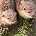 Otters by M.S. Photography/Art