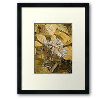Wild Aster Framed Print