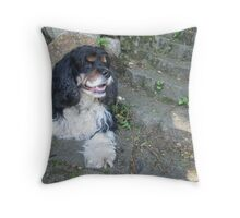 Tri Color Spaniel Throw Pillow