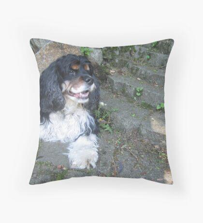 Tri Color Spaniel Throw Pillow