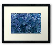Blue, Blue Hydrangeas Framed Print