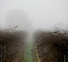 Vineyard Fog by John Hearne