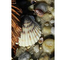 Scallop shell and leaf Photographic Print