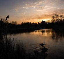 The Posing Goose by Georgia Mizuleva