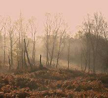 Birches in Mist by Ian Mac