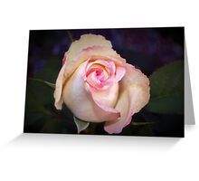 Pink-tipped highlights Greeting Card