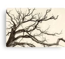 Tree Fingers of Perpetual Motion Canvas Print