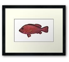 Red Sea Coral Grouper Framed Print