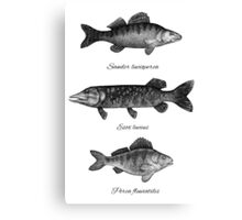 Zander, pike and perch Canvas Print