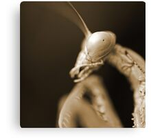 Mantis In Sepia Canvas Print