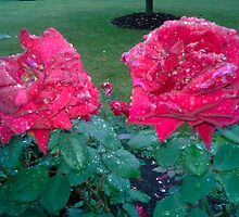 TWIN RED ROSES IN THE RAIN by JoAnnHayden