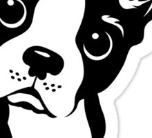 Boston Terrier Dog  Sticker
