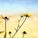 Brunch Bunch by Darlene Lankford Honeycutt