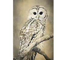 Barred Owl Bw Sepia Photographic Print