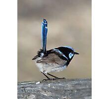 Blue Wren Photographic Print