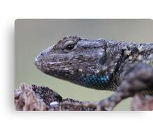 Western Fence Lizard Canvas Print