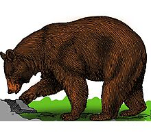 Animal bear biology brown color mammal Photographic Print