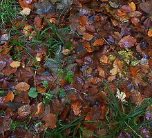 Nature´s Autumnal carpet by Heather Thorsen