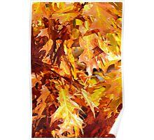 Golden Oak Leaves Poster