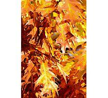 Golden Oak Leaves Photographic Print