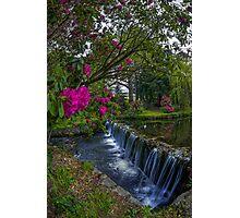 Flower Creek Photographic Print