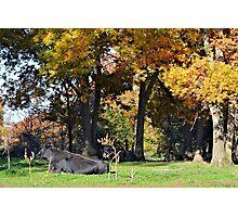 Ash Pasture Photographic Print