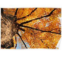 Golden Maple Of Tosanak Poster