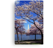 Washington Monument Through Cherry Blossoms Canvas Print