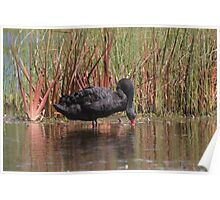 Spring In The Wetlands Poster