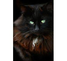 Halloween black cat Photographic Print