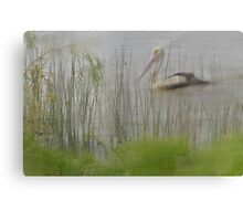 Pelican In The Mist Canvas Print