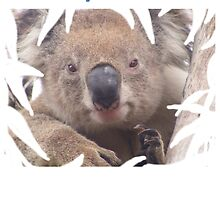 I helped make a home for Koala Clancy by Echidna  Walkabout