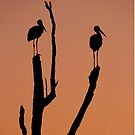 Silhouette of two storks standing on a tree at sunset.  by PhotoStock-Isra