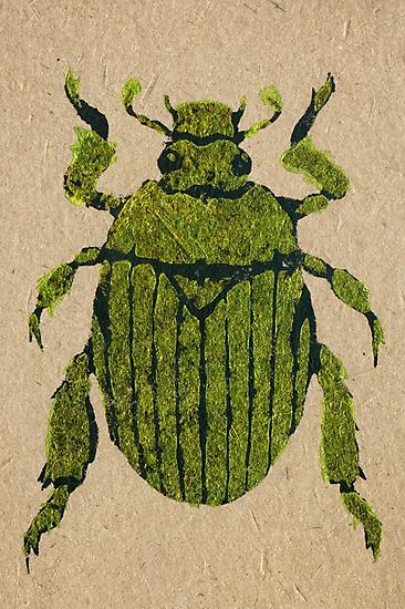 Christmas beetle 03 by Richard Morden