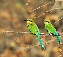 Bee-eater Greens - Mother and Chick of Spring by LivingWild