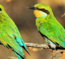 Bee-eater Greens - Mother and Chick of Spring Sticker