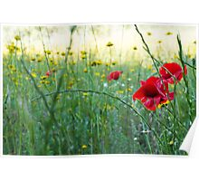 Natural World - Red Poppies Poster