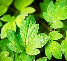 Green Leaves by Christina Rollo