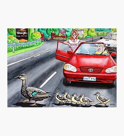 Ducks Crossing Photographic Print
