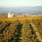 Vineyard cathedral. by Paul Pasco