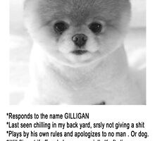 Gilligan The Worlds Cutest Puppy by papabuju