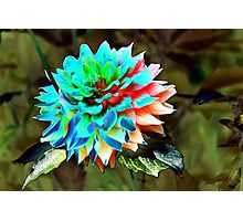 abstract dahlia Photographic Print