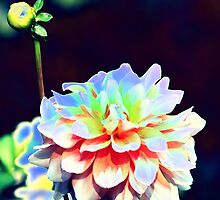 abstract dahlia by spetenfia