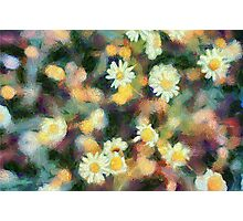 Daffodil Fields  Photographic Print
