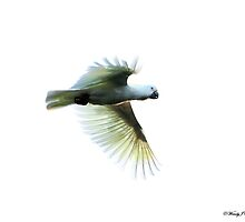 White Flight by WendyJC